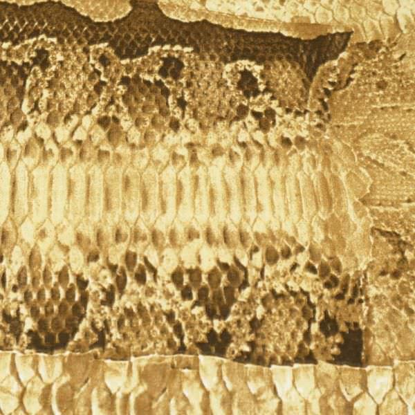 Baumwolljersey mit Schlangenmuster - beige/braun/dunkelbraun