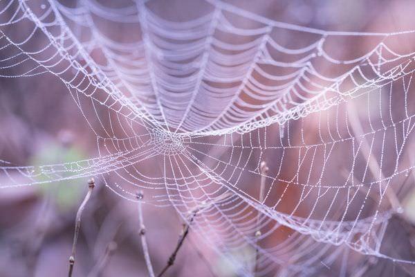 Ein seidiges Spinnenetz mit Morgentau